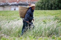 La donna nepalese va raccogliere le verdure nel giardino con una zappa e un canestro, nel villaggio di Chusang Fotografie Stock Libere da Diritti
