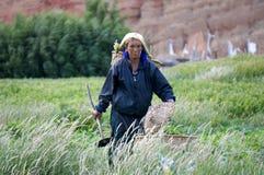 La donna nepalese va raccogliere le verdure nel giardino con una zappa in sua mano, nel villaggio di Chusang Immagini Stock Libere da Diritti