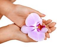 La donna passa il fiore della holding Fotografia Stock