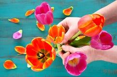 La donna passa l'organizzazione e ordinare del bouque dei fiori del tulipano fotografia stock libera da diritti