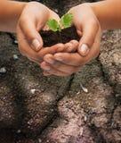 La donna passa la pianta della tenuta in suolo Immagine Stock