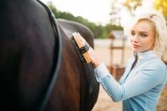 La donna prende la cura per i capelli del cavallo marrone Fotografie Stock Libere da Diritti