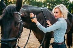La donna prende la cura per i capelli del cavallo marrone Fotografie Stock