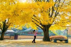 La donna prende una foto all'autunno nel gyeongbokgung Fotografia Stock