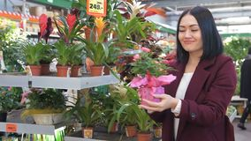 La donna sceglie i fiori nel deposito Servizio di piante in supermercato e casalinga che guarda il fiore del vaso per l'interno d archivi video