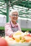 La donna senior vende la verdura sul mercato immagini stock libere da diritti