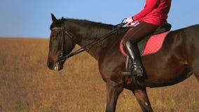 La donna si siede su una vista laterale che del cavallo un atleta guida su un cavallo Movimento lento archivi video