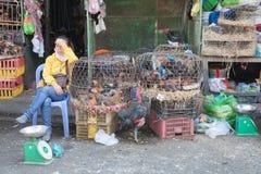 La donna sta vendendo i polli al mercato bagnato fotografia stock