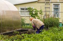 La donna su una residenza dell'estate uguaglia la terra della zappa per piantare Immagini Stock
