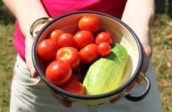 La donna tiene la ciotola con i pomodori ed il cetriolo Fotografie Stock Libere da Diritti