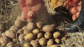 La donna versa fuori le patate per l'alimentazione degli animali archivi video