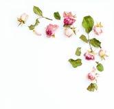 La dosis rosada secada florece el arreglo de la esquina Imagenes de archivo