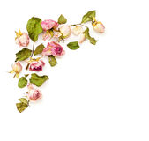 La dosis rosada secada florece el arreglo de la esquina Fotos de archivo