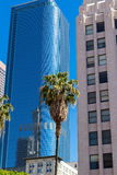 LA Downtown Los Angeles Pershing Square palm tress and skyscrape Stock Photos