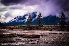 La dulcamara della natura e del disboscamento fotografia stock libera da diritti