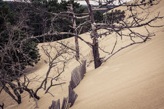 La duna famosa dei recinti di Pyla, il più alta duna di sabbia in Europa Fotografia Stock Libera da Diritti
