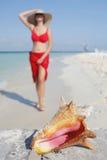 La durée est une plage (la conque) Photos libres de droits