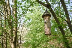 La ejecución antigua de la colmena en el árbol, hecho del tronco del árbol, nombró el duplyanka o el bort Imagen de archivo libre de regalías
