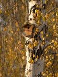 La ejecución de nidal en un amarillo del árbol de abedul se va Fotos de archivo libres de regalías