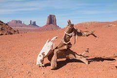 La ejecución del scull del caballo en la conexión seca abandonó la tierra Imagen de archivo