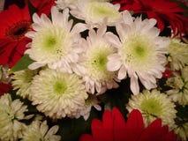 La encuesta de la macro de la flor es blanca Foto de archivo libre de regalías