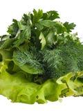 La ensalada fresca verde de la lechuga se va, eneldo y perejil en blanco Fotos de archivo libres de regalías