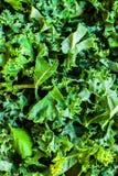 La ensalada verde fresca de la col rizada sale del fondo Fotografía de archivo