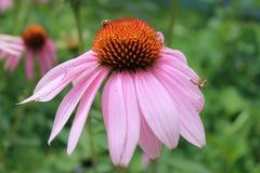 La entidad de la flora y de ella es vida fotos de archivo