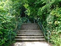 La entrada al bosque foto de archivo