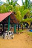 La entrada al hotel de la playa en un centro turístico tropical fotos de archivo libres de regalías