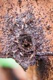 La entrada de la colmena de la abeja Fotos de archivo libres de regalías
