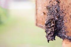 La entrada de la colmena de la abeja Foto de archivo libre de regalías