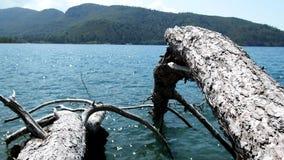 La erosión de onda costera lleva a la pérdida de bosque almacen de metraje de vídeo