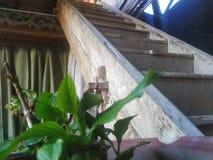 La escalera de madera original del mesón fotos de archivo