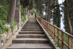 La escalera en el bosque Imagen de archivo libre de regalías