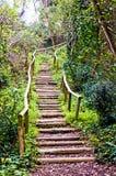 La escalera en el verde Foto de archivo