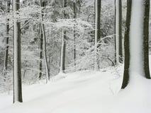 La escarcha cubrió árboles en invierno Imagenes de archivo