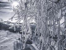 La escarcha cubrió las ramas del árbol de abedul iluminadas por mañana Imagen de archivo