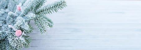 La escarcha cubrió ramas del abeto con una cadera color de rosa en invierno Imagenes de archivo