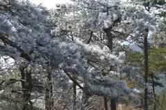 La escarcha escarchada en Wulao Feng de la montaña de Lushan en invierno Imagen de archivo libre de regalías