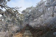 La escarcha escarchada en Wulao Feng de la montaña de Lushan en invierno Foto de archivo libre de regalías