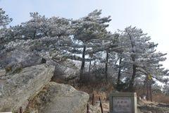 La escarcha escarchada en Wulao Feng de la montaña de Lushan en invierno Fotografía de archivo