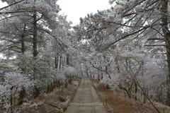 La escarcha escarchada en Wulao Feng de la montaña de Lushan en invierno Foto de archivo