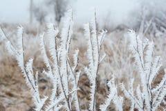 La escarcha hermosa en el arbusto congelado ramifica con la niebla blanca Fotografía de archivo libre de regalías