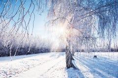 La escarcha y la nieve en el abedul en invierno parquean Fotos de archivo libres de regalías