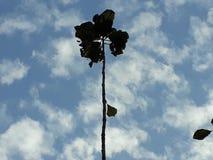 La escena de la cuatro-hoja en el cielo foto de archivo libre de regalías