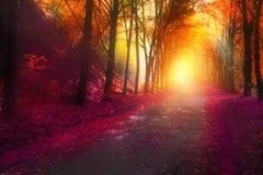 La escena de la fantasía en parque del otoño con el sol irradia Foto de archivo