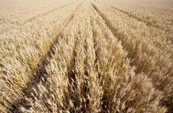 La escena de una buena cosecha Foto de archivo libre de regalías