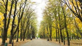 La escena otoñal con amarillo y verde se va en los árboles y fal Fotografía de archivo libre de regalías