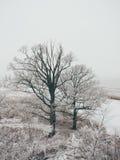La escena rural del invierno con niebla y blanco coloca efecto del vintage Imagen de archivo